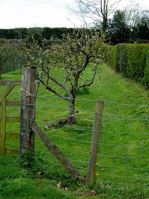 Orchard by tennis court
