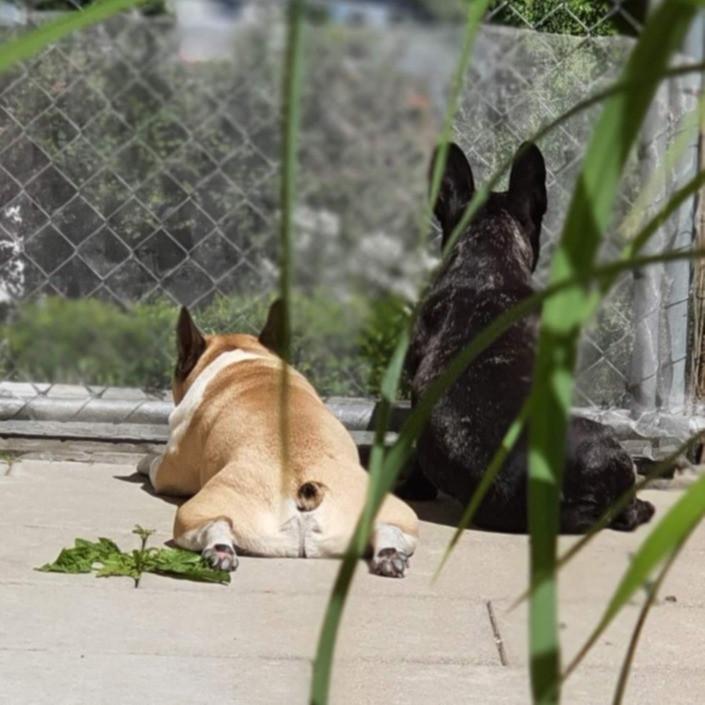 Peanut und Heidi