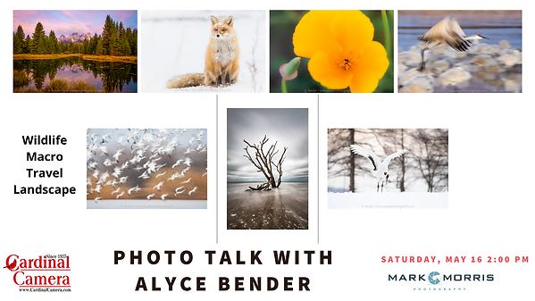 Photo Talk Alyce Bender (1).png