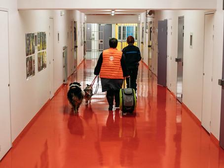 Prisons : des chiens contre le stress