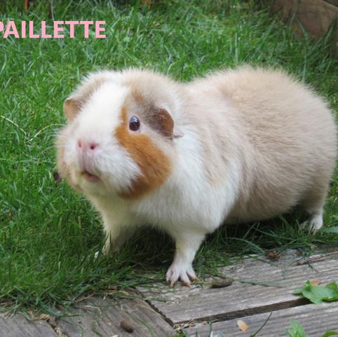 Paillette