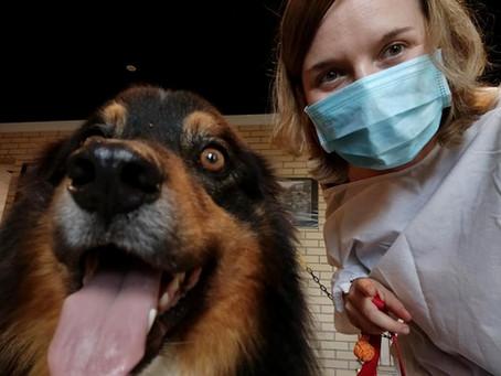 Daphné a repris ses séances de médiation animale