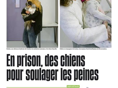 En prison, des chiens pour soulager des peines