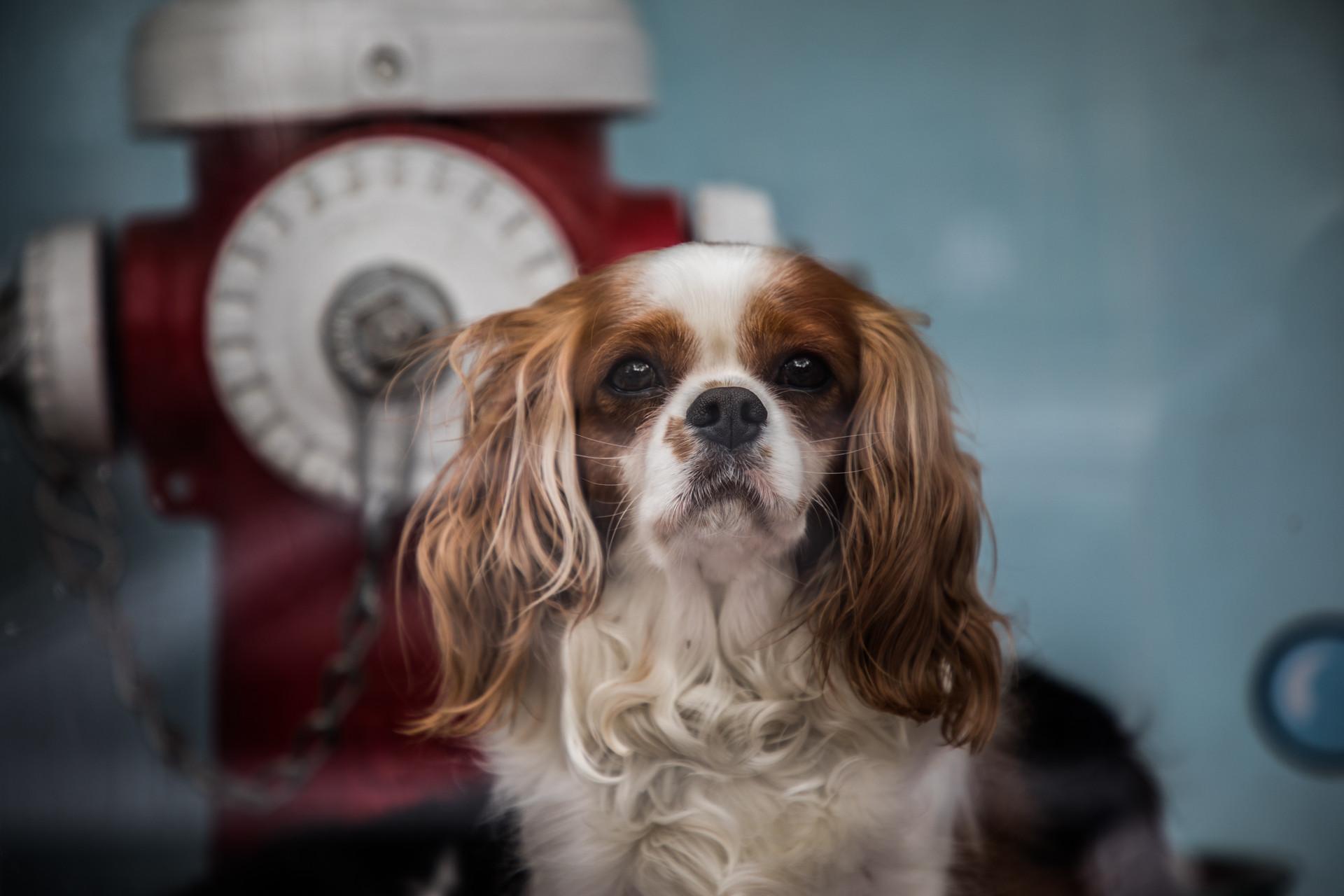 Hoboken Dog Wash