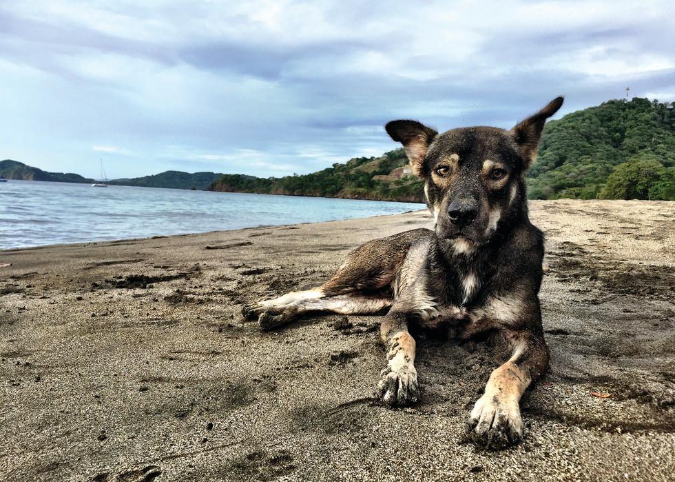 Beach Dog, Playa Hermosa