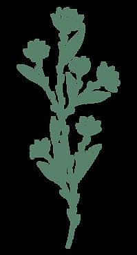 escencias-florales-agera-merida-yucatan.