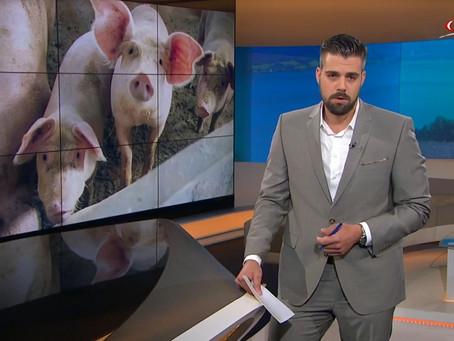 Tierwohl-Schweinestall stinkt den Anrainern