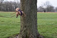 Glitch Tree.jpg