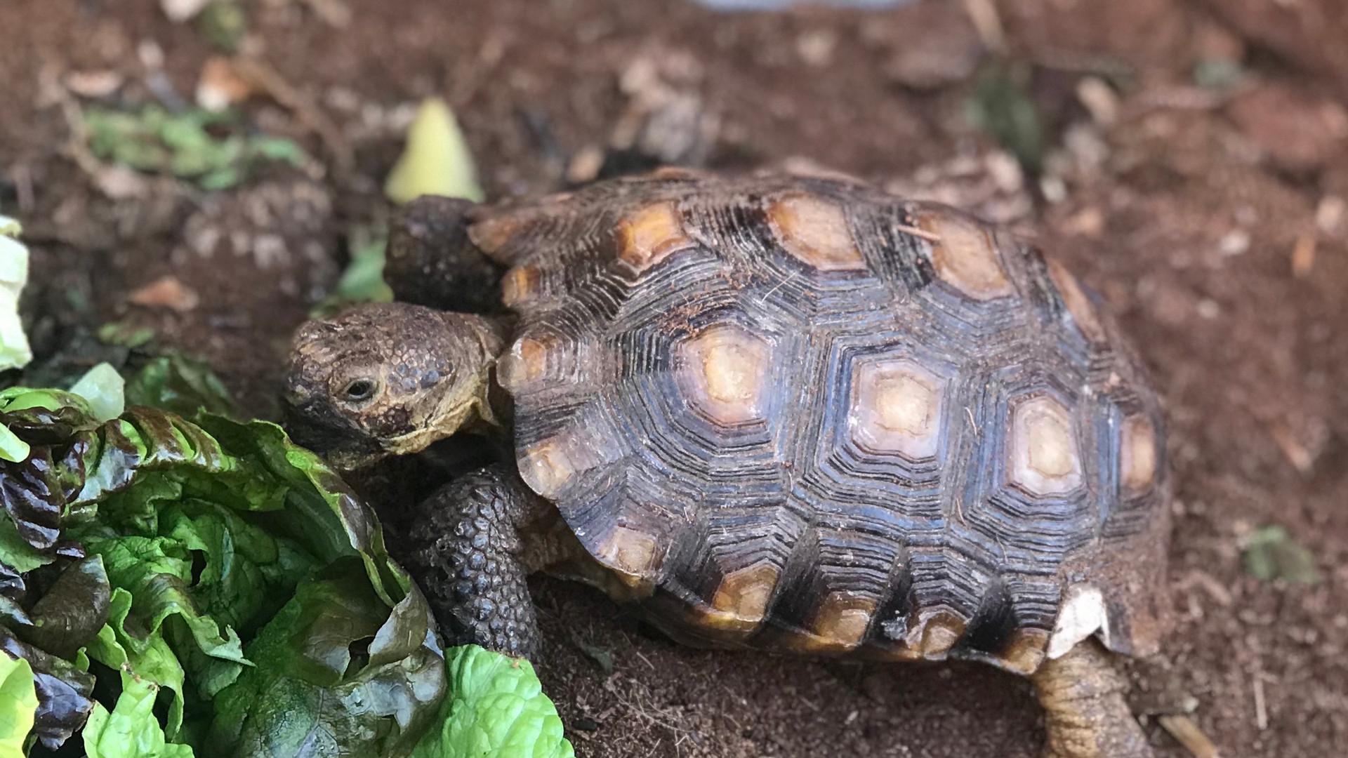 Tortoise-Touche.jpg