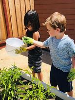 Kids Garden.jpeg