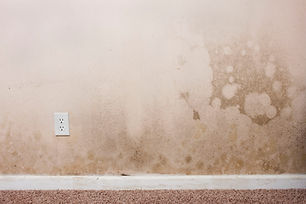 mold-on-wall-minnesota-wisconsin.jpg
