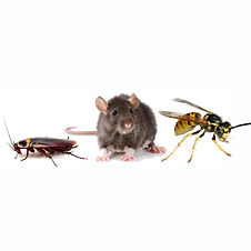household-pests-mouse.jpg