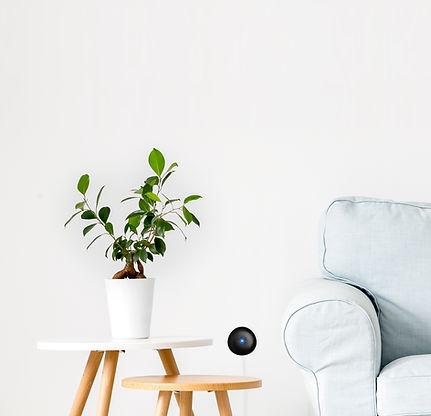 melissa-flower-and-sofa.jpg