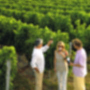 Tasting in the vinyeards