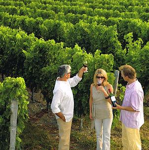 Degustation dans les vignes