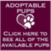 Available pups.png
