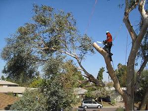 AS4Less Tree Removal1.jpg