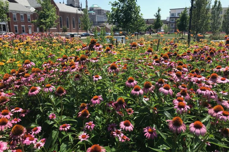 marcum park flowers.jpg