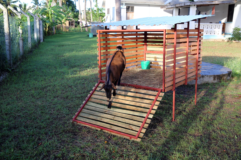 Goat House Ramp