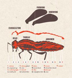 insect illustration.jpg