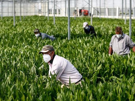 GLI INVISIBILI SARANNO DAVVERO MENO INVISIBILI? Regolarizzazione stranieri ed emersione lavoro nero