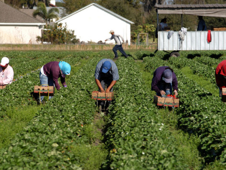 We must protect farmworkers' rights while supporting farmers