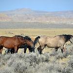horses-61158_1280.jpg
