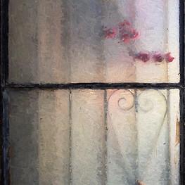 Bouganvilla peeking through window in Tijuana