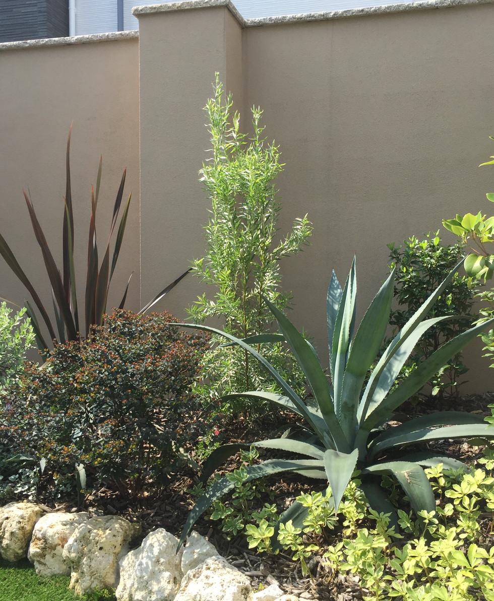 植栽2.jpg