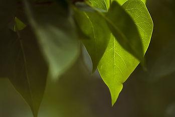 leaf-3359892_1920.jpg