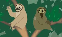 sloth_detail_1