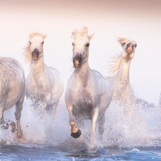 The Legendary Horses 3