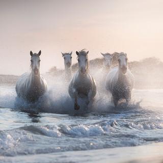 The Legendary Horses 1