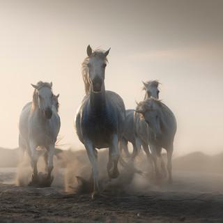 The Legendary Horses 2