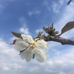 Quand printemps rime avec confinement