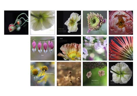 Kalender mit (eigenen) Makrofotografien