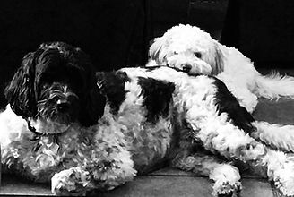 Pets, Laura Schoch Collection