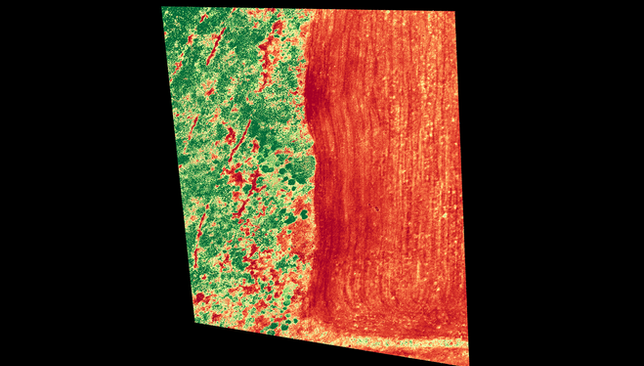 NDVI_export_ThuOct13.png