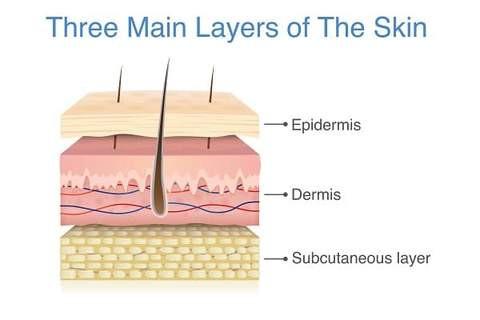 tre huvudsakliga lager i huden