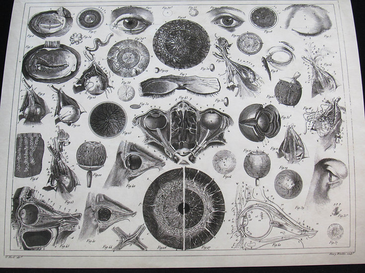 Anatomy of the Human Eye, 8X10 Print