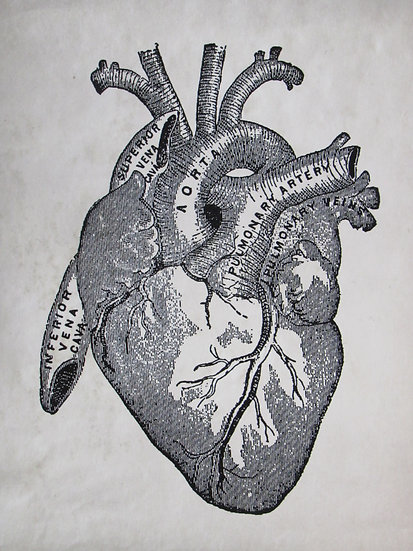 Vintage Anatomy Heart Diagram Print 8X10