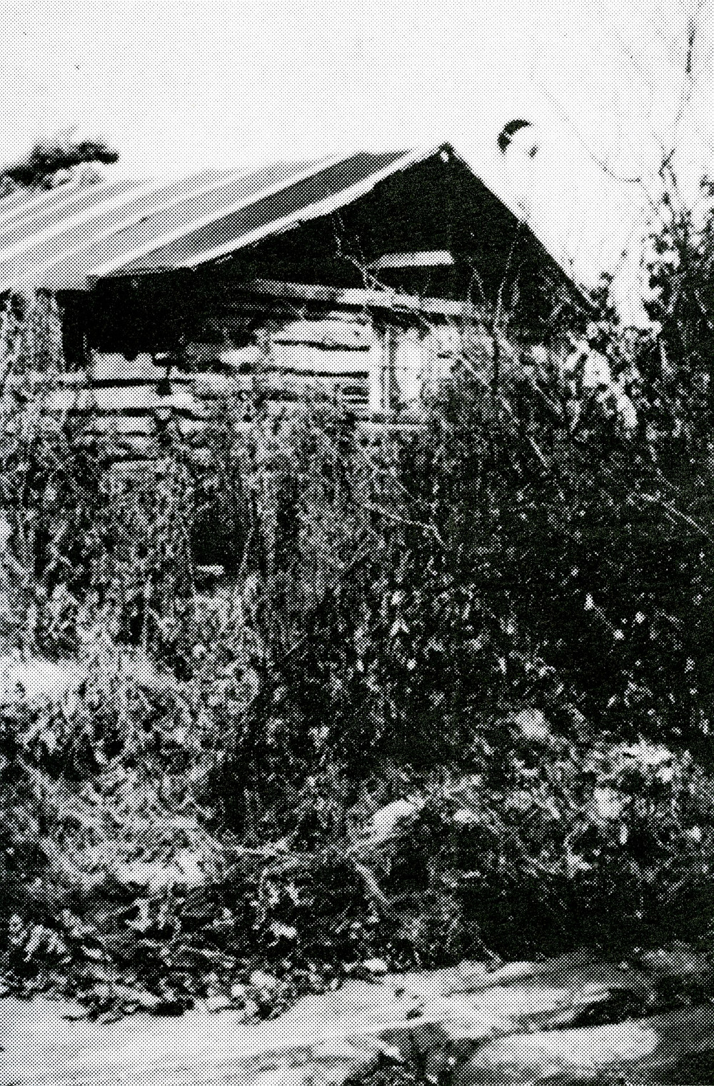 First Log Cabin on McKenzie Point