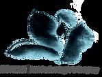 IMMPAC logo.png