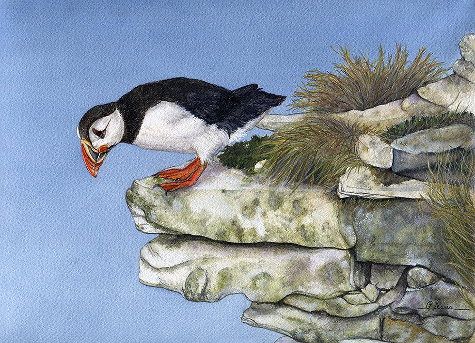LewisGaynor_OnTheEdge_Puffin_Watercolours_29.5x21cm_ £250.jpg