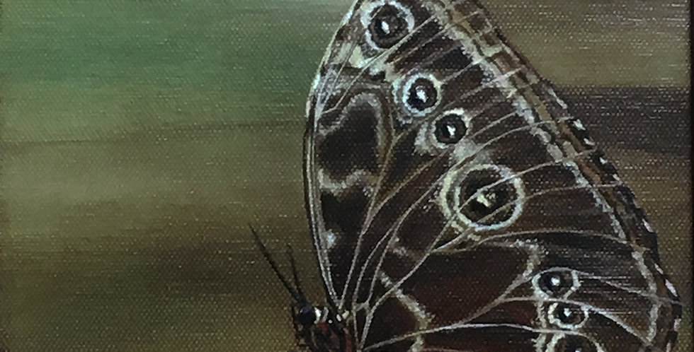 Blue Morpho Butterfly ~ acrylic painting