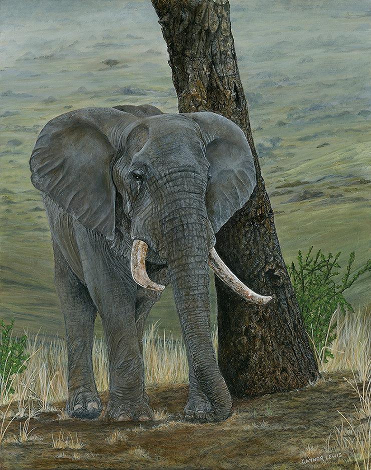 LewisGaynor_Bachelor_AfricanElephant_Acrylics_27.9x35.6cm_£595.jpg