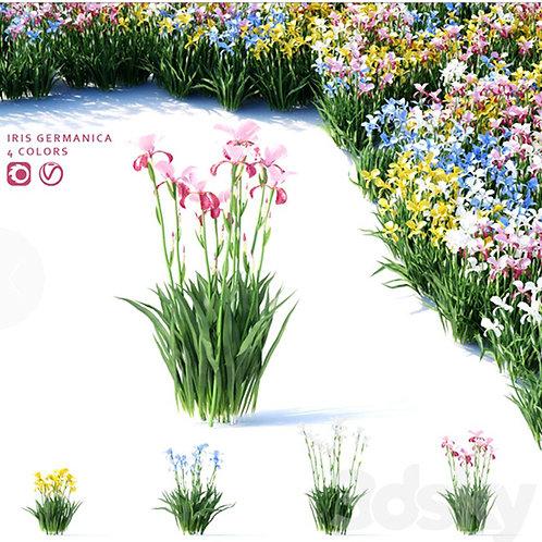 Inground Plants 01