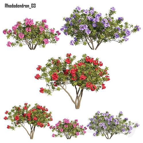 Inground Plants 10