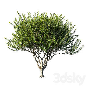 virtual staging designer virtual furniture and plants and trees for virtually staged rooms