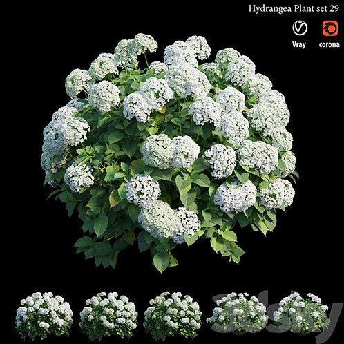 Inground Plants 04
